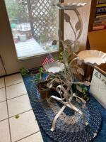 Live plants, blue small oval rug, white metal plant stand, outside timer, nippers - 2